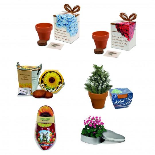 Vasos biodegradáveis
