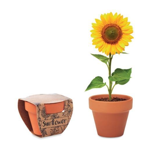 Pequeno Vaso SunFlower